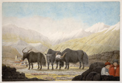 A view of Badrinath; snow-covered mountain in the background, three yaks and two boys in the foreground. Garwhal (U.P.). 29 May 1808